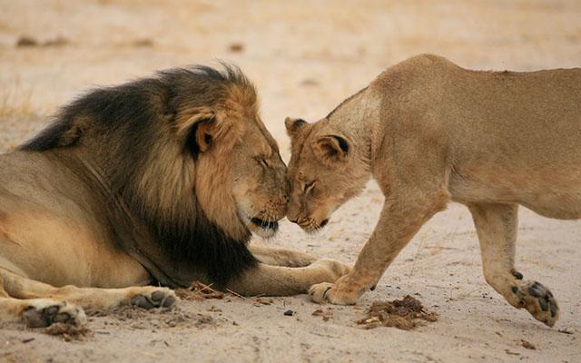 Отношения разумных животных