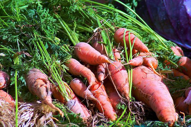 Опасность вегетарианства и веганства