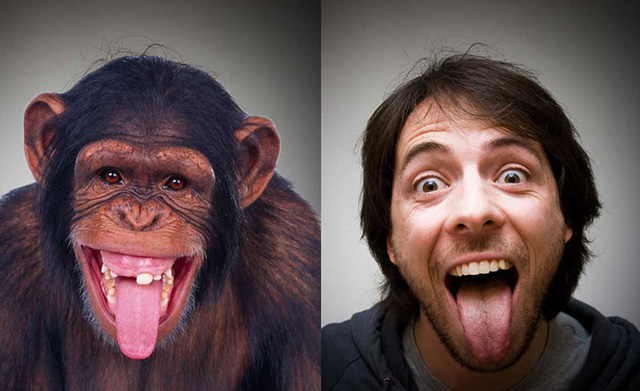 Человек произошёл от обезьян
