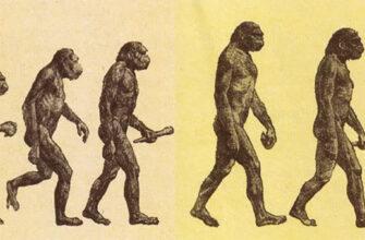 Происхождение человека и неандертальцы